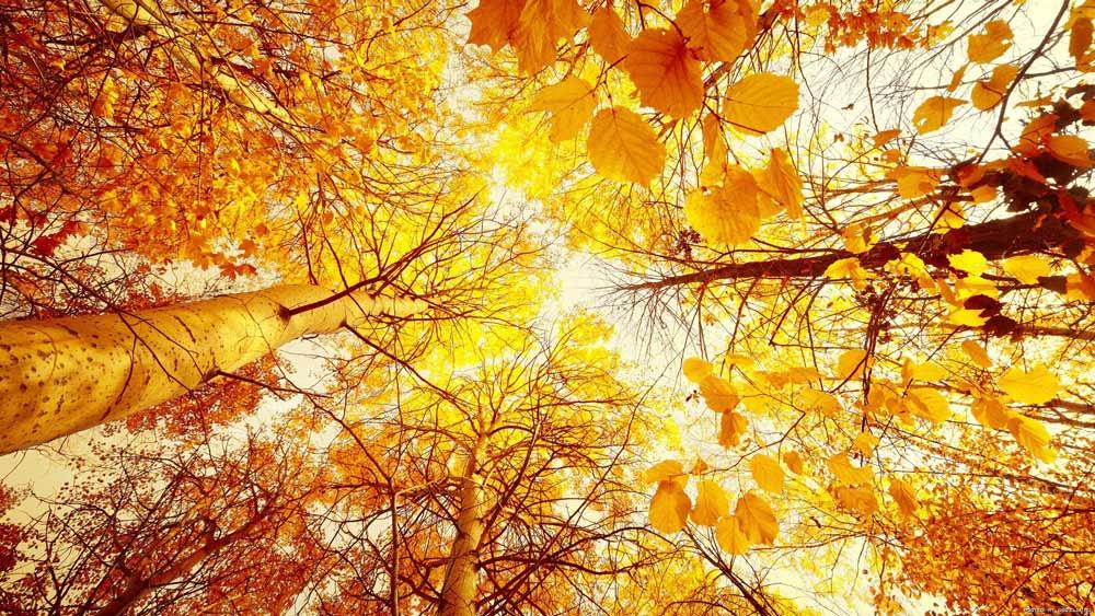 Итоги сентября на Shutterstock