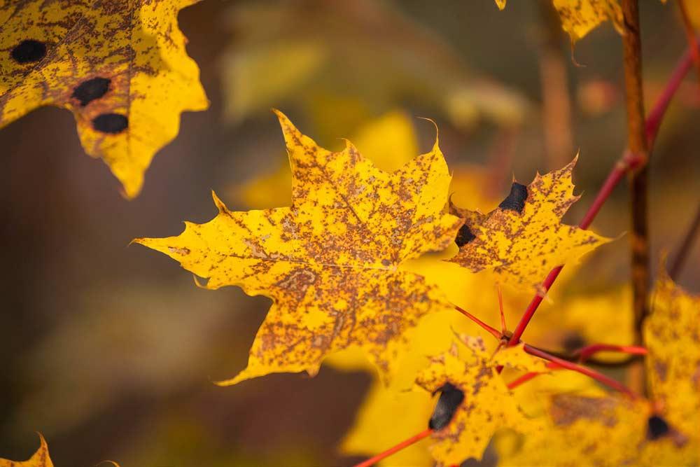 Середина октября на Shutterstock